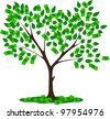 money tree with leaves and dollars - stock photo