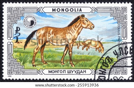 MONGOLIA - CIRCA 1986: A stamp printed in Mongolia shows animals , Equus Przewalskii, circa 1986  - stock photo