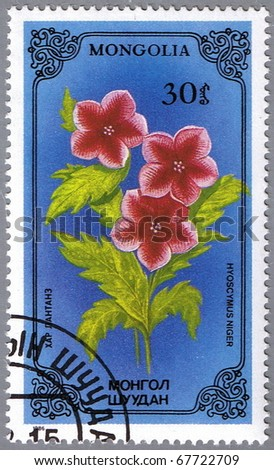 MONGOLIA - CIRCA 1986: A stamp printed in Mongolia shows Hyoscymus niger or black henbane, series devoted to flowers, circa 1986