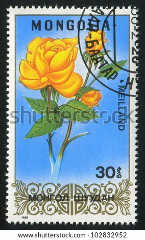 MONGOLIA - CIRCA 1988: stamp printed by Mongolia, shows  flower, Rose, circa 1988