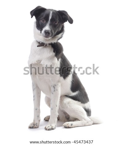 Mongrel cute dog looking to a camera isolated on white - stock photo