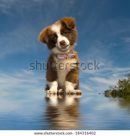 mongrel puppy on blue sky background - stock photo