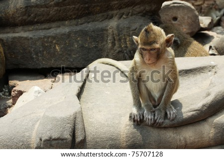 Monkey, A dull baby monkey sitting on ancient remains in Lopburi, Thailand.