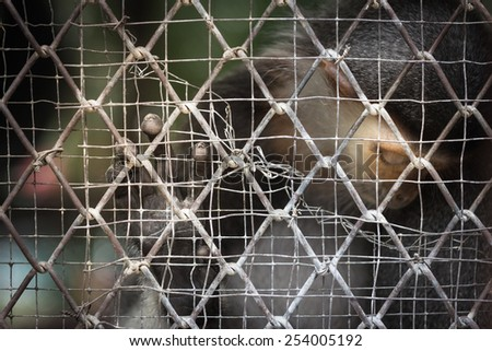 Monkey are trapped in the cage,sad at zoo. - stock photo