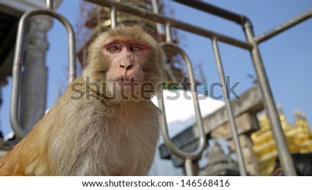 Monkey at the nepal temple look curiously in low angle in Swayambhunath temple or monkey temple