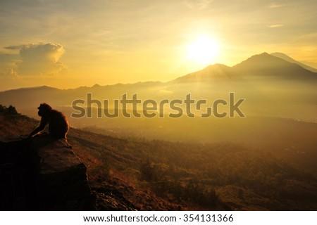Monkey at Top of Batur Volcano Mountain ,Kintamani Bali Indonesia - stock photo