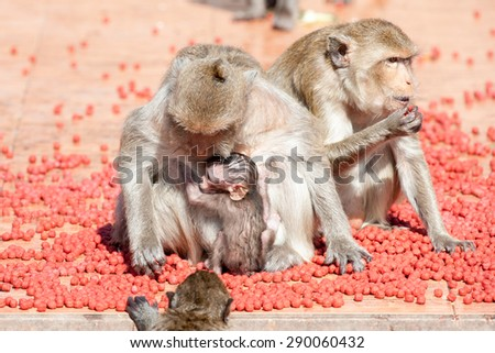 Monkey eating pet food
