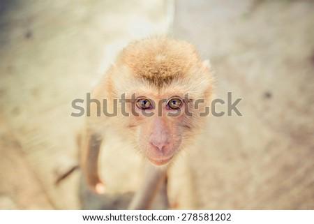 Monkey face - stock photo