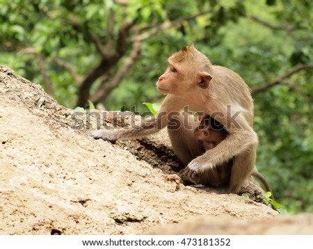 monkey family is sitting on the mountain