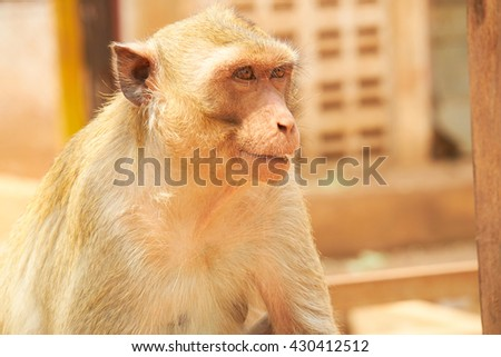 monkey in a zoo in Thailand