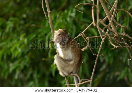 Monkey in nature on tree