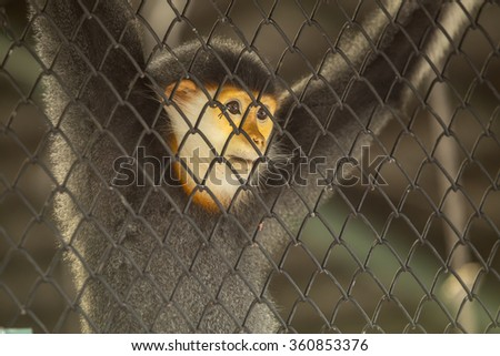 Monkey in the cage, Looking for freedom