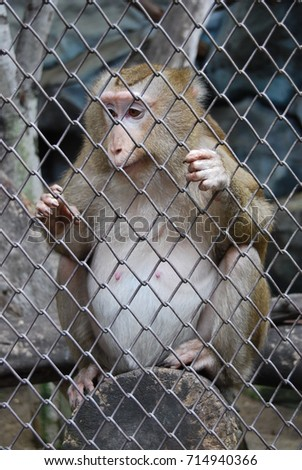 Monkey in the cage or in the zoo lacked freedom to live. Need food from humans