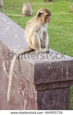 Monkey in the city in Lopburi, Thailand.