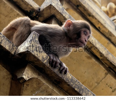 Monkey in the Swayambhy prepares for the first jump - stock photo
