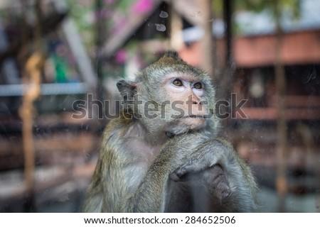 monkey in the zoo - stock photo