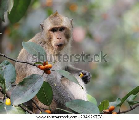 monkey look food - stock photo