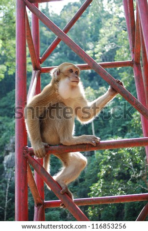 monkey on a pole close up - stock photo