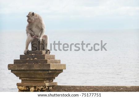 Monkey on Uluwatu - stock photo
