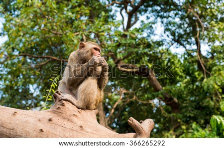 monkey  playing on a tree branch