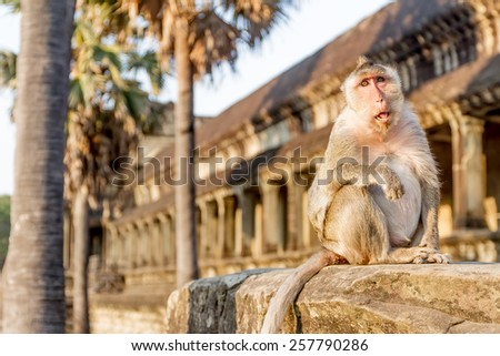 monkey portrait, angkor wat, cambodia, in background - stock photo