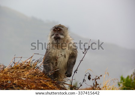 Monkey searching garbage for food in mountain - stock photo