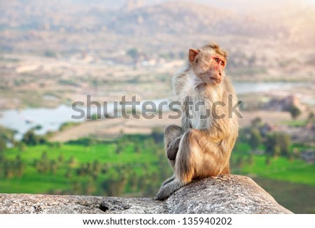 Monkey sitting at Hanuman Monkey Temple near ruins of Vijayanagara Empire in Hampi, Karnataka, India - stock photo