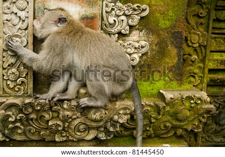 Monkey Sitting on Ancient Ruins - stock photo