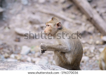 Monkey sitting on gray stone in the forest