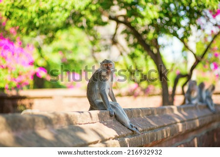 Monkey sitting on the wall in a Balinese temple, Indonesia - stock photo
