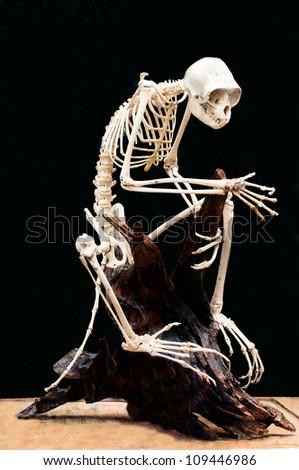 Monkey skeleton on black background - stock photo
