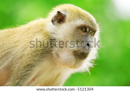 Monkey stares off with intense look in jungle