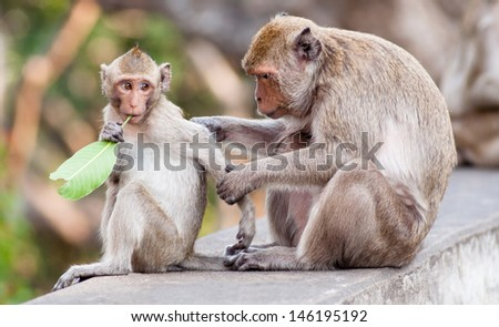 Monkey with a baby at Khao Wang and Phra Nakhon Khiri Historical Park, Phetchaburi is located on a hill that overlooks the city of Phetchaburi in Thailand. - stock photo