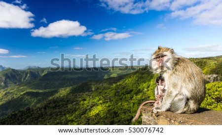 Monkeys at the Gorges viewpoint. Black River Gorges national park. Mauritius. Panorama