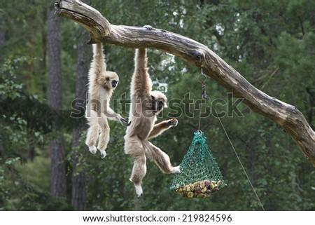 Monkeys in zoo - stock photo