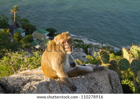 Monkeys on the mountain. - stock photo