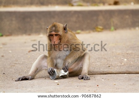 Monkeys play toys. - stock photo