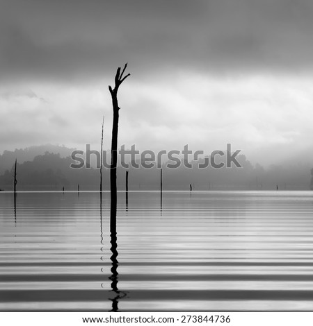 Monochrome of dead trees and the mist in the lake at morning light of Khao Sok, the South of Thaialand - stock photo