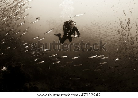 monochrome seascape of diver and fish