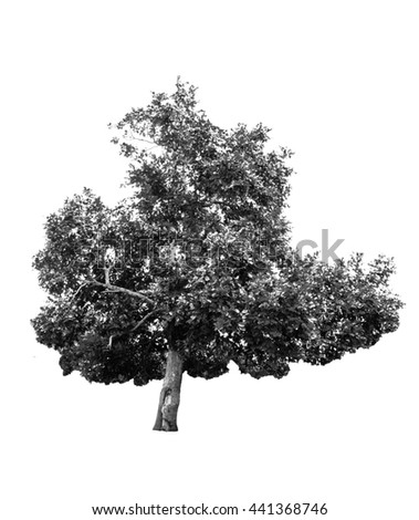 monochrome tree
