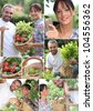 Montage of a couple picking produce - stock photo