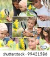 Montage of kids examining sunflowers - stock photo