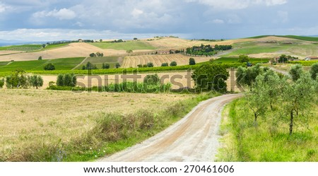 Montalcino (Siena, Tuscany, Italy): country landscape at summer