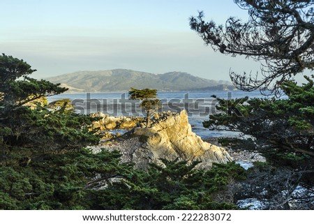 MONTEREY, CALIFORNIA - JUL 26, 2008: Lone Cypress tree view along famous 17 Mile Drive in Monterey. Sources claim it is one of the most photographed trees in North America. - stock photo