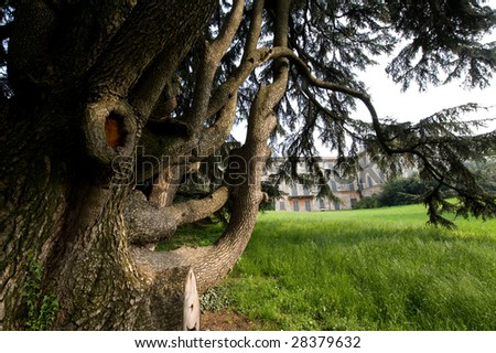 Monticello Brianza (Lombardy, Italy) - Villa Greppi and its park with very old trees - stock photo