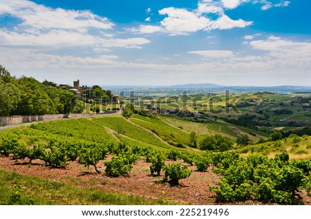 Montmelas castle and vineyard - stock photo