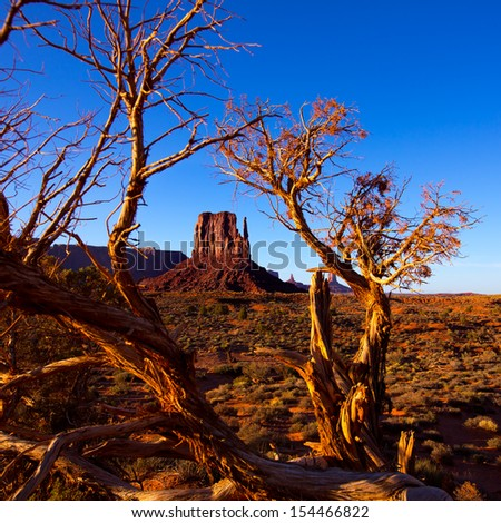 Monument Valley West Mitten Butte with dried branches Utah