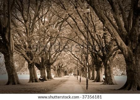 Moody autumn alley - stock photo