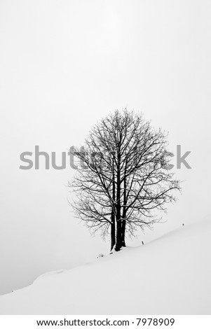 Moody Black and White photo of a lonely tree, on a snow field, with mist.