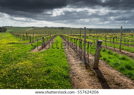 Moody clouds over a vineyard in the Barossa Valley